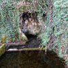 La source et le lavoir des Gambins